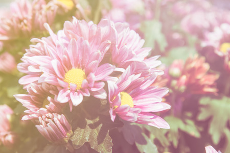 colorize: abstract flower background.