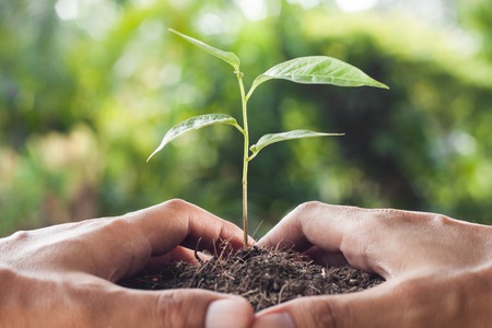 responsibility: hands holding and caring a young plant Stock Photo