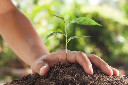 green concept: hands holding and caring a young plant Stock Photo
