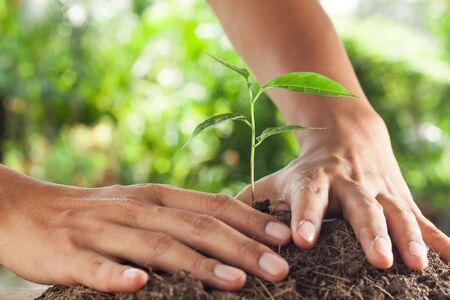 responsabilidad: manos sosteniendo y cuidar una planta joven Foto de archivo