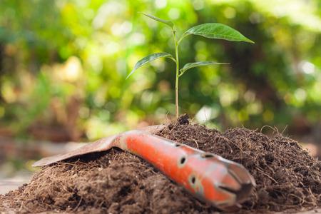 verduras verdes: J�venes de plantas que crecen en suelo marr�n con la pala en el fondo verde bokeh Foto de archivo