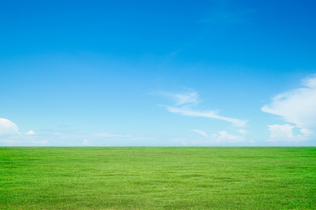 blue sky and fields: Green grass and sky