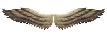 animal angelic: wings isolated on white background.