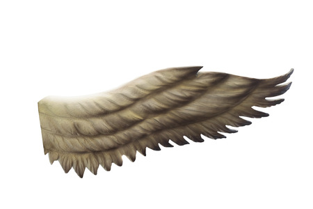 sanctity: wings isolated on white background.