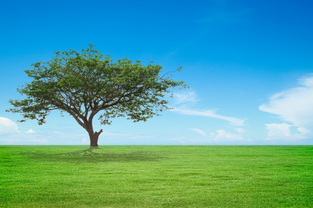 big tree with green field and blue sky