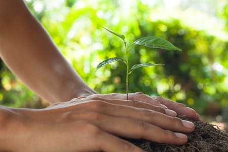 hands holding and caring a young plant,Abstract of corporate social responsibility. Stock Photo