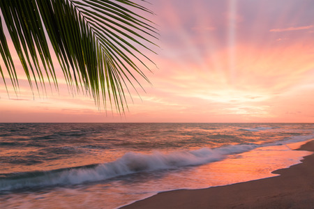 Tropical beach with palm tree at beautiful sunset. Nature background