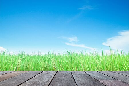 wood grass: Wood plank with green grass field and sky background Stock Photo