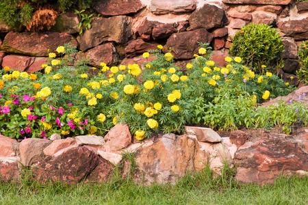 garden marigold: Marigold flower in rock garden
