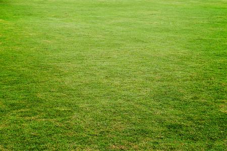 tiefe: Grüne Wiese, Wiese für Fußball, Gras Textur für den Hintergrund
