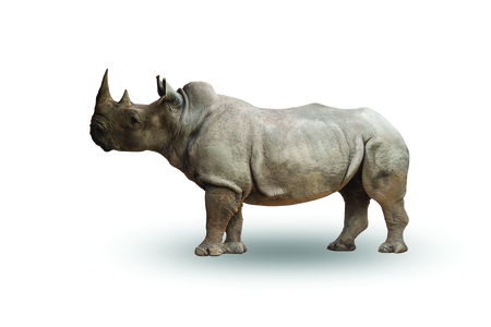 Rhinoceros isolated on  white background,with clipping path Reklamní fotografie - 65196100