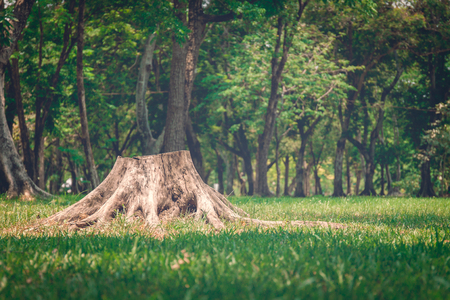 tree stump in the forest Stock Photo