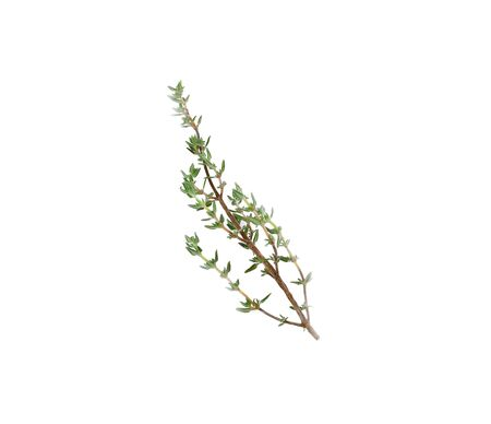 Thyme sprigs isolated on a white background