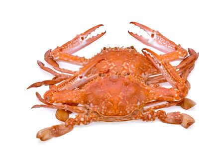 horse crab isolated on white background