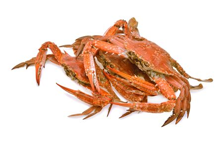 seafood horse crab sea lek animal thailand Crab steamed fresh on a white background. Imagens