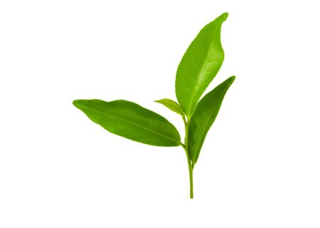 Green tea leaf isolated on white background Stockfoto