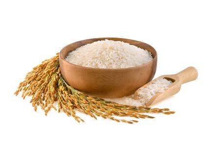 plants de riz, grains de riz au jasmin thaïlandais dans un bol en bois sur fond blanc