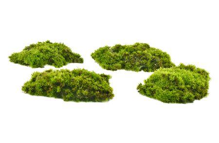 Moss green on white background. Фото со стока