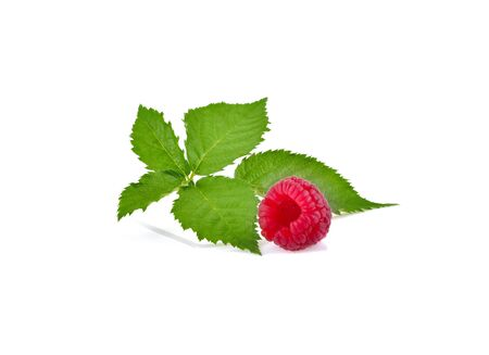 Ripe raspberries with leaf isolated on a white background Фото со стока