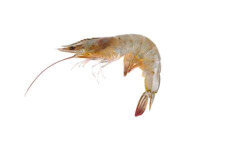 Fresh raw shrimp isolated on white background.