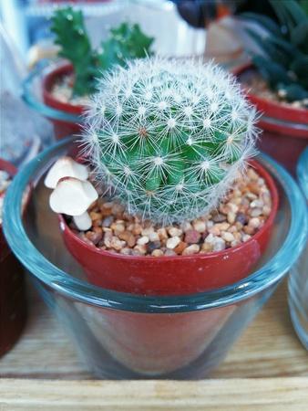 litle: A Little cactus