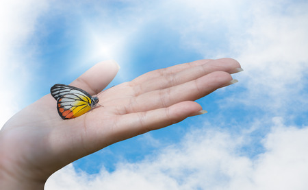 A beautiful butterfly Painted Jezebel ( Delias hyparete) sitting on woman hand with beautiful sky, clouds and sun ray background.Save life ,save the earth