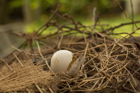New life was born safety. Bird nest with broken egg and feather left empty.