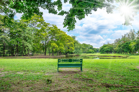 endlessly: sunny summer park with tree , green grass ,lake and bench