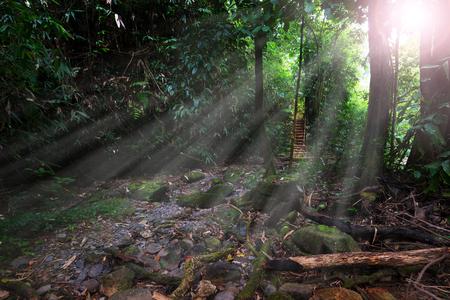 スリ Phangha 国立公園、日光。 タイ南部の熱帯雨林。 写真素材