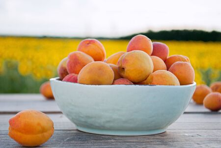 apricots in a bowl on the background of nature