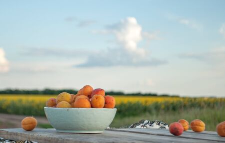 apricots in a bowl on a sky background with clouds and a field with sunflowers