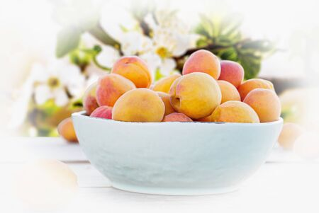 apricots in a bowl on a background of a flowering branch Stok Fotoğraf - 132061551