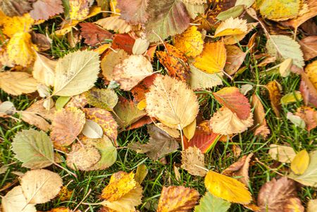 Autumn leaves on the ground on a cloudy rainy day