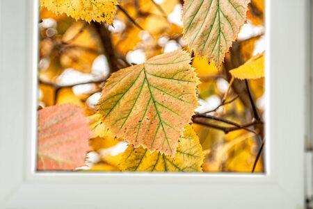 autumn yellow leaves behind the window frame for background Stok Fotoğraf