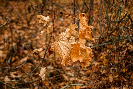 Autumn fallen yellow leaves in the forest Stok Fotoğraf