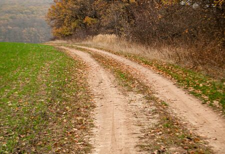 Winding rural road going down fields and trees Stok Fotoğraf