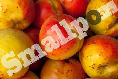 Peaches ripe affected by smallpox, black spots 版權商用圖片