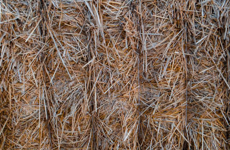 dry straw close-up for background and desktop wallpaper 版權商用圖片