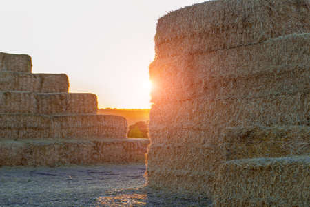 dry stack of straw stacked on top of each other at sunset