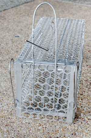 pitfall: Mousetrap (rat cage) isolated