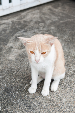starvation: Stray cats or street cats Stock Photo