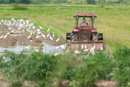 plough machine: Farmer in tractor preparing land for sowing