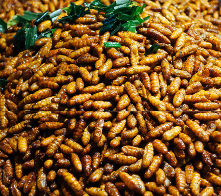 langosta: fried bug in a pan insects popular snack street food in Thailand