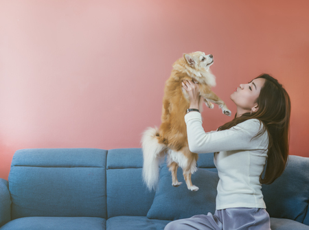 Portrait of young Asian woman holding  her dog chihuahua on sofa at home.