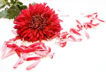flowers Stock Photo - 4448720