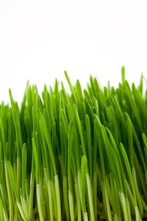 green juicy bright grass isolated on white photo