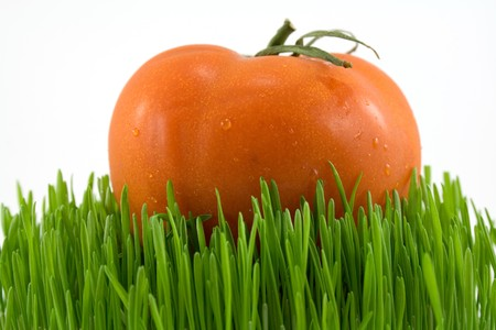 nutricion: red tomato on green grass isoalted on white