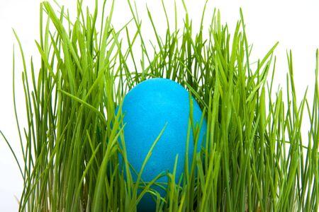 one easter egg isolated on white background photo