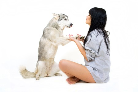 cute girl with grey siberian husky isolated on white
