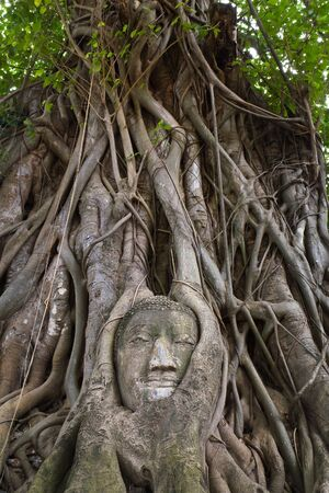 head of buddha statue at ayutthaya, thailand photo